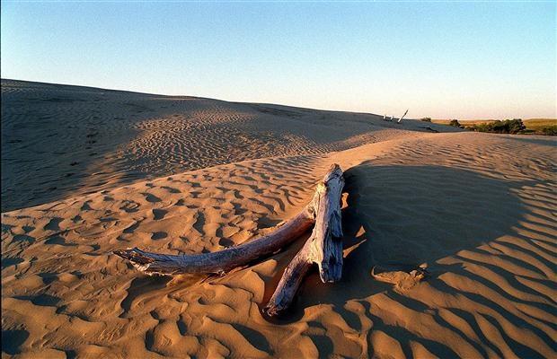 "View of the dunes that make up the Great Sandhills near Sceptre, #Saskatchewan. ""Parks provide great autumn vistas"" - Vancouver Sun."