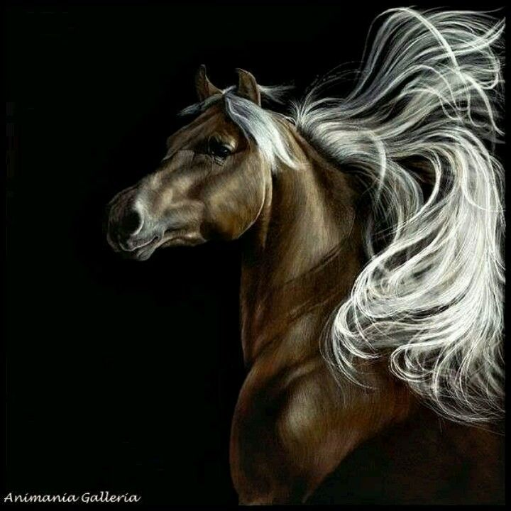 Wild Thing By Sally Maxwell Master Scratchboard Artist Horse
