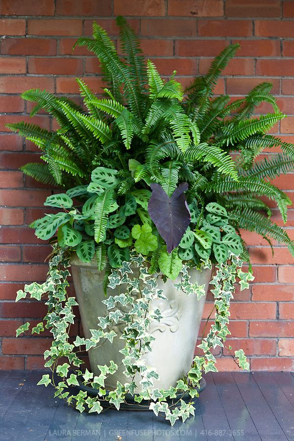 Ivy ferns and other tropical plants in a tall white stone pot against a red brick wall IDEA FOR FLOWERS Corey likes