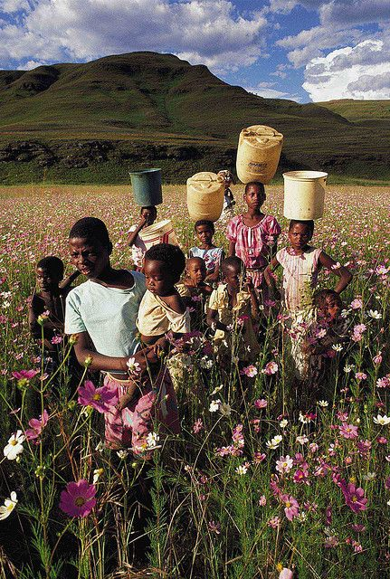 Zulu Children in a field of Cosmos - Natal Midlands ...