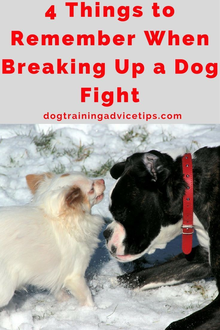 how to stop a dog fight