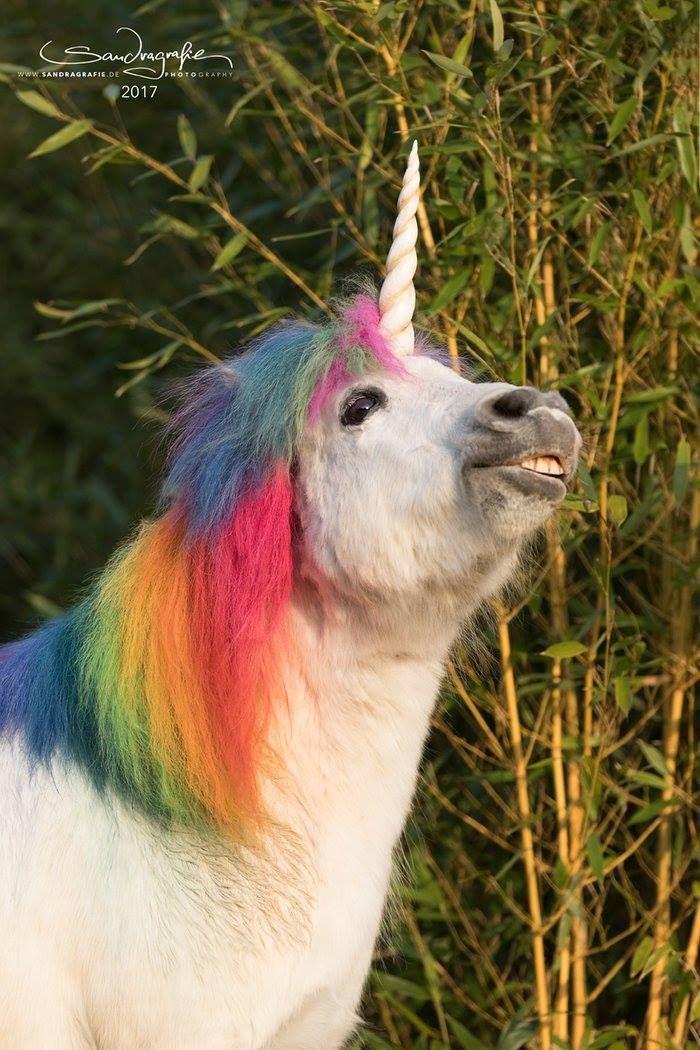Pferd Pferde Ponys 14 cm Pink Lila Pegasus im Display