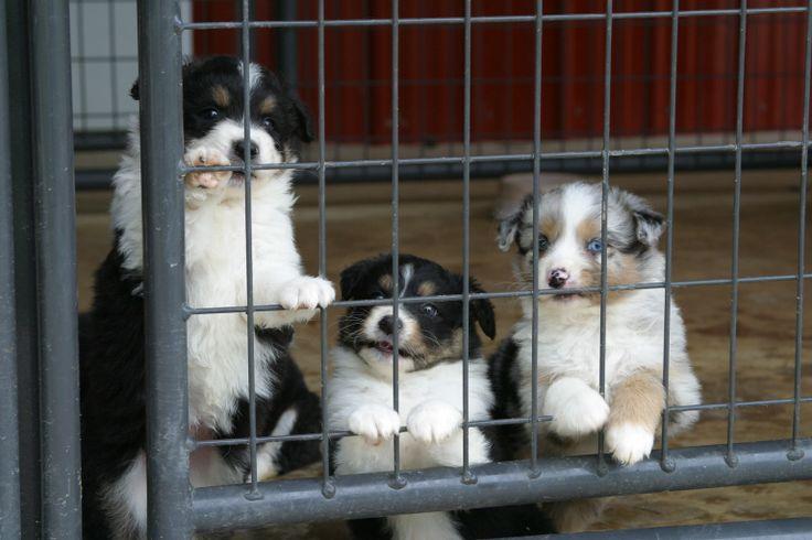 Safe enough for pups too! Priefert.com