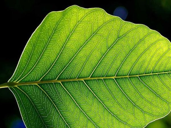 natural form: 10+ handverlesene Ideen zum Entdecken in Fotografie ...