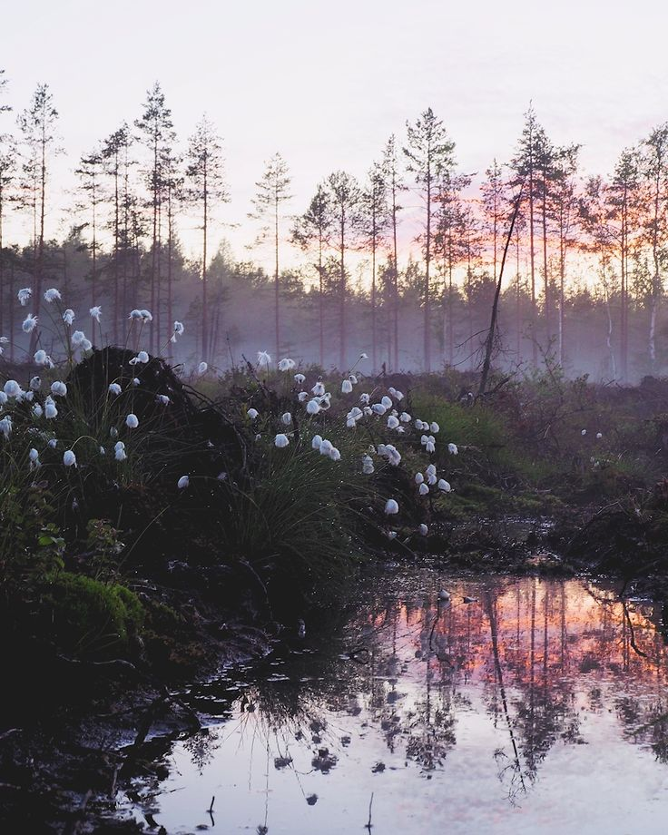Sandra Linnell - Älvdans vid Midnatt. Fairytale sunset in foggy forest. Available as poster and laminated picture at Printler, the marketplace for photo art.