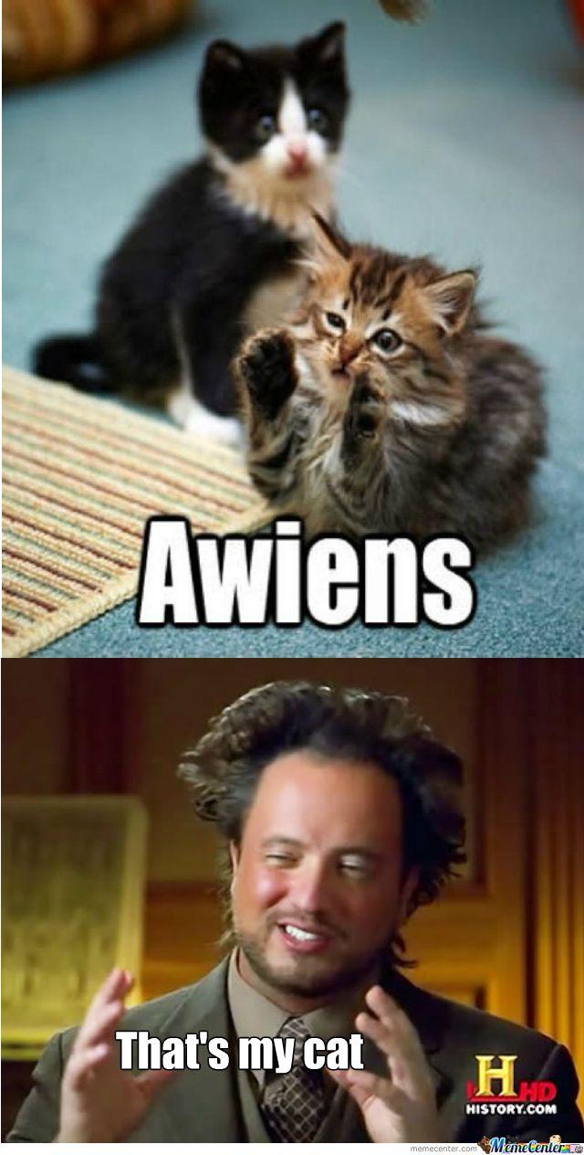 Giorgio Tsoukalos's Cat. Ancient Aliens Memes