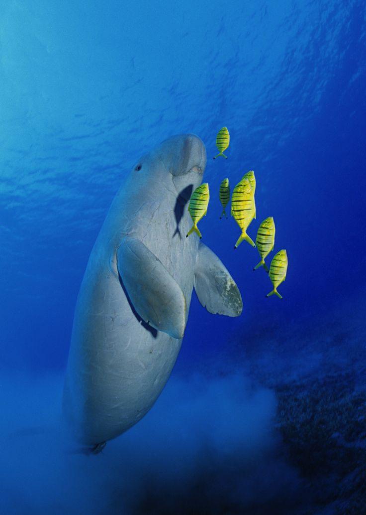 Underwater safari at Bazaruto Island, Mozambique