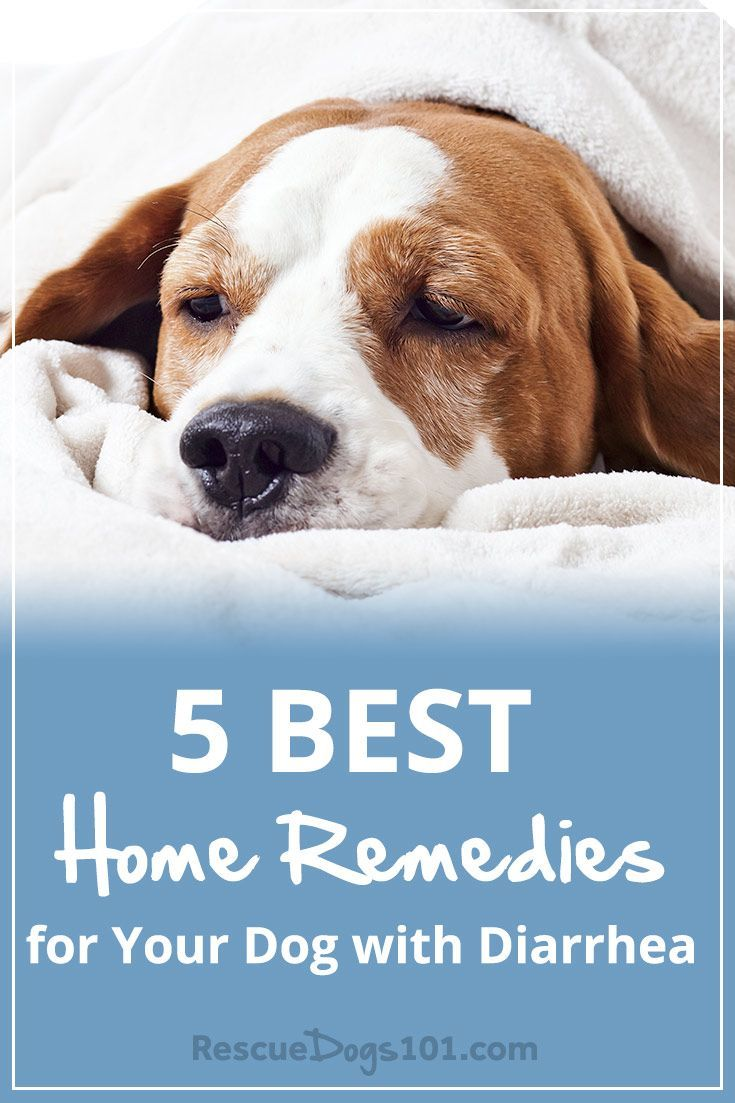 5 Easy Home Remedies For Your Dog With Diarrhea Dog Diarrhea