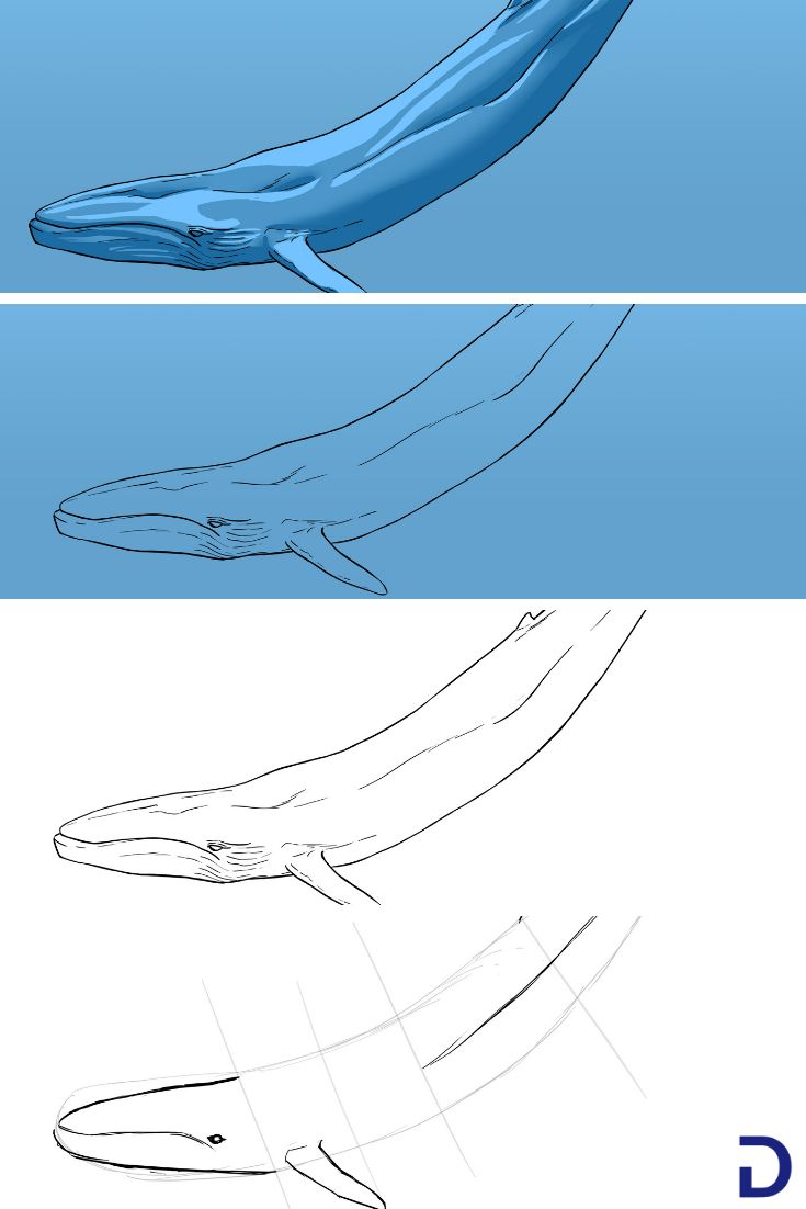 Comment dessiner une baleine apprendre dessiner avec - Comment dessiner une baleine ...