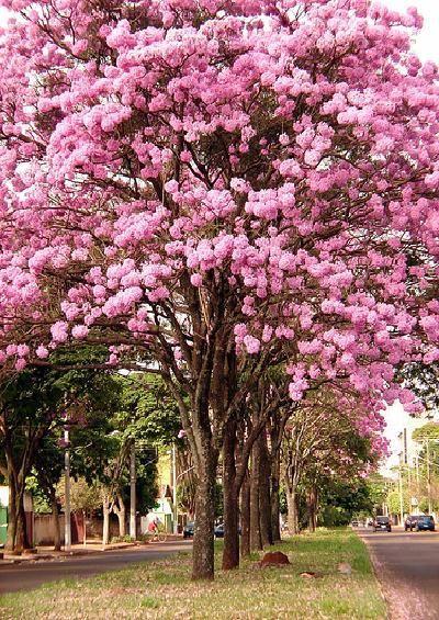 Campo Grande,Mato Grosso do Sul-Brasil