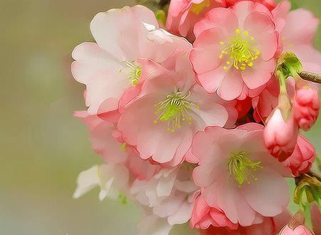 1270 best flores rvores flora images on pinterest plants i want to do with you what spring does with the cherry trees pablo neruda twenty love poems and a song of despair mightylinksfo Images