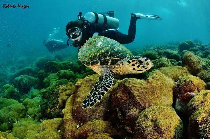 Arraial do Cabo, a capital brasileira do mergulho