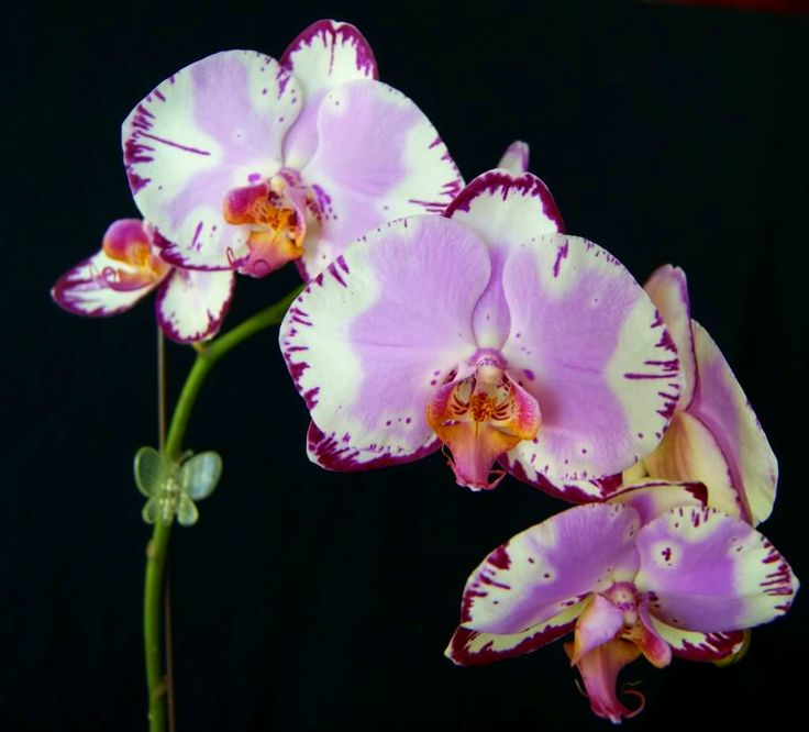 17 Best Images About Orchids Orchids And More Orchids On