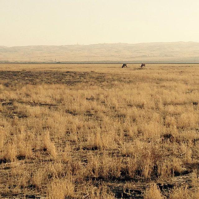 California State Parks Tule Elk State Natural Reserve