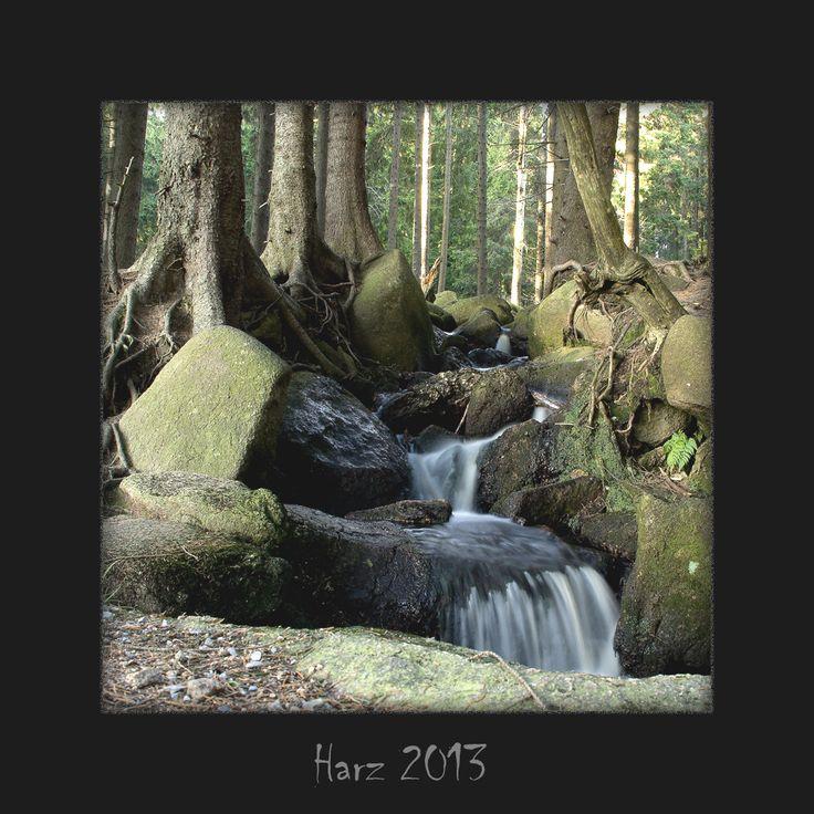 Fabulous Harz Wald