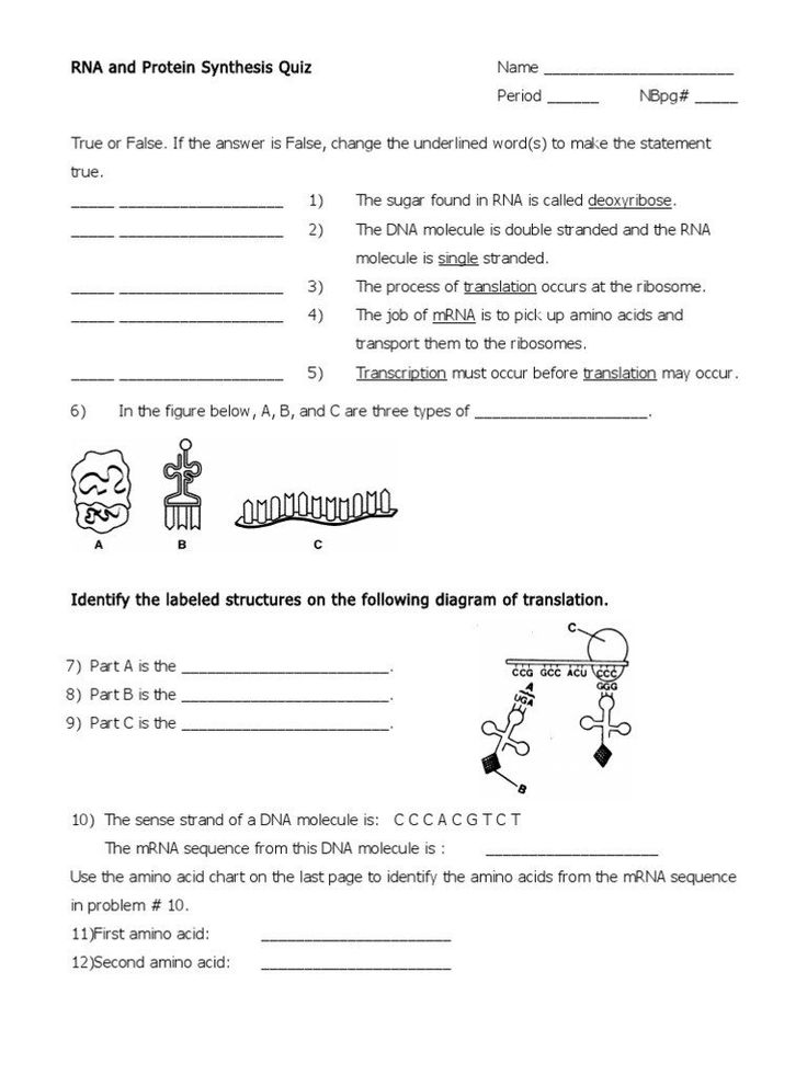 Macromolecules Chart Worksheet Answers Rna and Protein ...