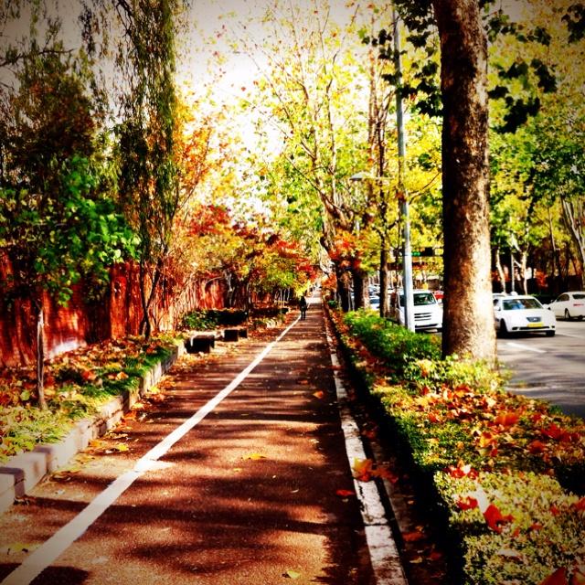 Autumn in Seoul, somewhere between Noksapyeong and Itaewon.