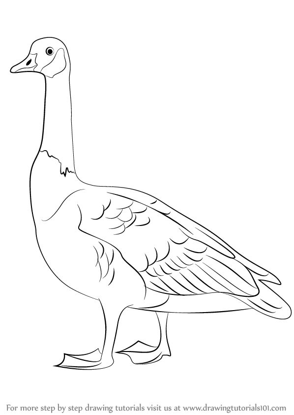 Learn How to Draw a Canada Goose (Birds) Step by Step : Drawing Tutorials