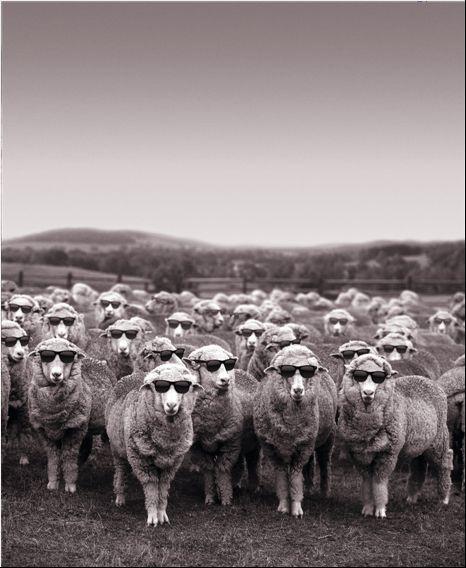 Woolmark Cool Wool campaign