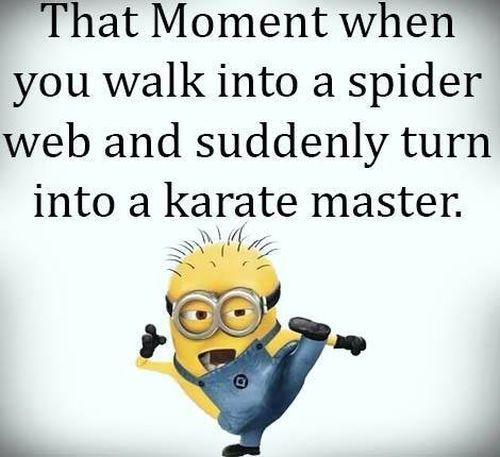 。◕‿◕。 See my Despicable Me  Minions pins https://www.pinterest.com/search/my_pins/?q=minions Funniest Minion, spider web, karate.