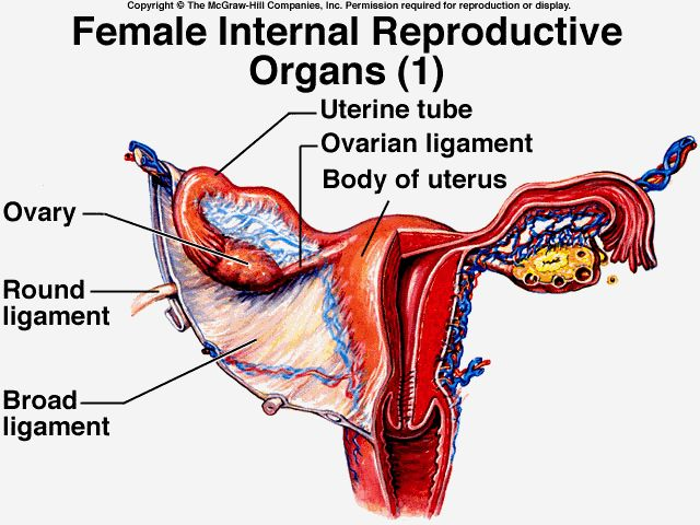 31 Best Female Anatomy Images On Pinterest Female Reproductive