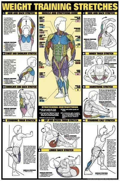 Another great picture. These stretches stretch the main muscles used in weight training, or the ones that get tight very often.