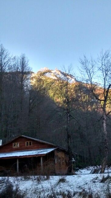 Araucarias en las montañas