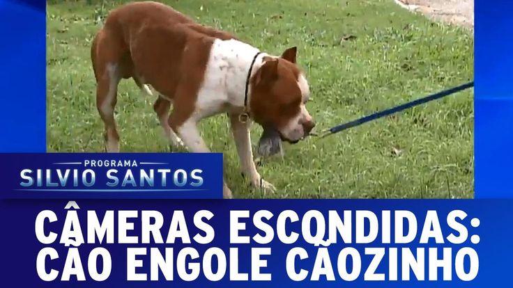Câmera Escondida (17/07/16) - Cachorro engole cachorrinho