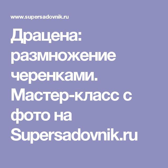 Драцена: размножение черенками. Мастер-класс с фото на Supersadovnik.ru