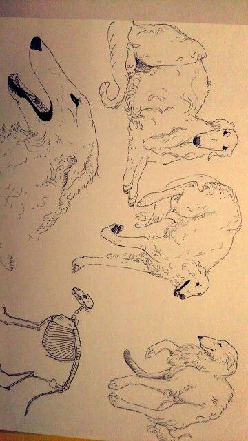 Borzoi dogs - love dogs