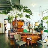 Lusting after this lacy tree philodendron in this lovely capture from @sophieallegaert 🌿🍃🌵 thank you for sharing your #jungalowstyle !