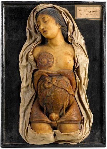 Antique anatomical wax model