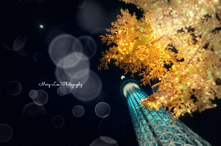 今更ながらのスカイツリー|mary-lou*Photography