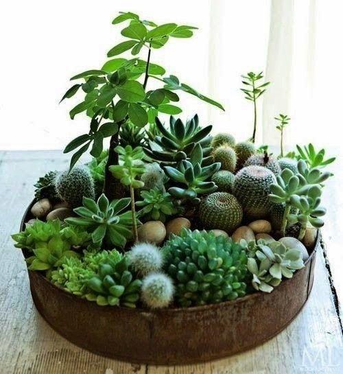 HOME INSPIRATION: Meer groen in huis met schattige vetplantjes! | Fashion | Annicvw.com