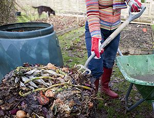 1000 images about gardening in the willamette valley on pinterest gardens vegetables and - The garden web forum ...