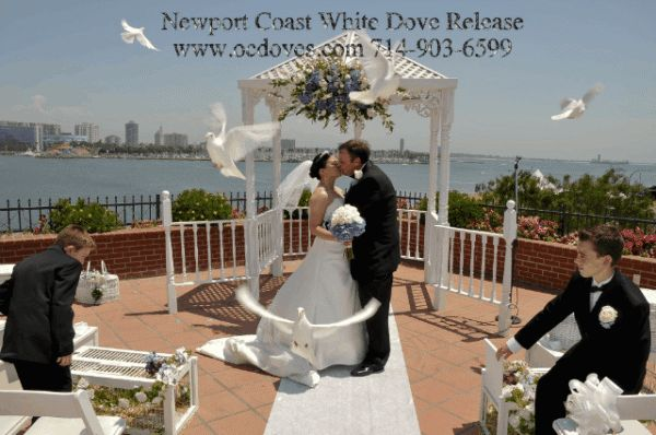 "Long Beach ""Reef"" White Dove Wedding www.OCdoves.com 714 903_6599 #wedding #weddings #ReefRestaurant #dove #doves #whitedoves #whitedoves #whitedoverelease #doverelease #event #events #california #LongBeach #unitedstates #QueenMaryShip #OCdoves #release"