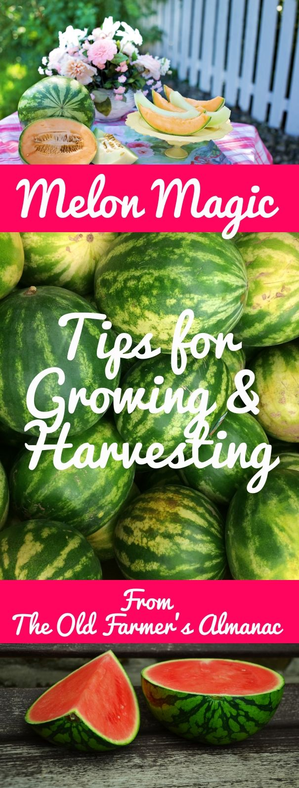 17 Best 1000 images about Gardening Tips on Pinterest Farmers almanac