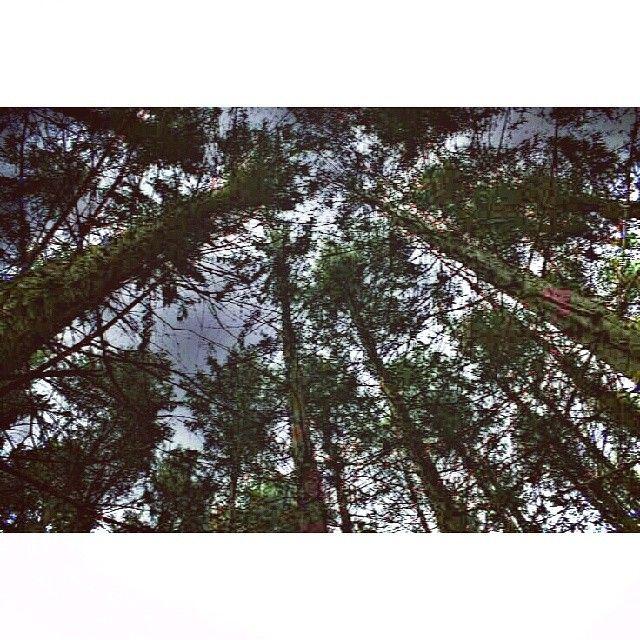 """""""#oakopeningspreservemetropark #oakopenings #swantonohio #ohio #trees #forest #woods #naturewalk #peaceful"""""""