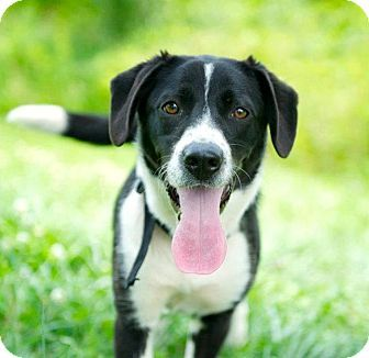 New Yorkers, take this puppy home with you.: Biscuits Faces, Best Friends, Border Collie Mix, Dogs Breeds, Cities, Border Collies Mixed, Adoption Border, Collies Dogs, Dogs Chronicles