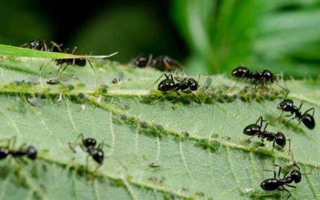 La formica e le sue principali caratteristiche Un insetto molto diffuso nel mondo è la formica. Esistono più di 10.000 specie di formiche sul pianeta. Questo insetto è facilmente distinguibile per la sua grande testa, la vita stretta (che la diff #formiche #insetti