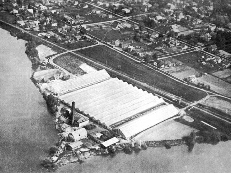Aerial view of Thomas A Ivey greenhouses, that grew roses and mums which were shipped throughout North America, circa, 1920.
