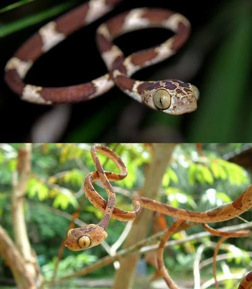 15 Best Images About Snakes Are Beautiful On Pinterest