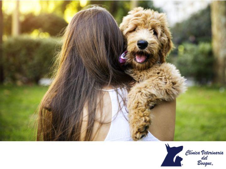 LA MEJOR CLÍNICA VETERINARIA DE MÉXICO. Entre más fuerte sea el vínculo entre la persona y su mascota, mayor es la posibilidad de que la persona secrete oxitocina, creando estados de felicidad y también de salud ayudando a liberar estrés y eliminar la depresión entre otras. En Clínica Veterinaria del Bosque te invitamos a visitar nuestro sitio web www.veterinariadelbosque.com, para conocer todos los servicios que ofrecemos.  #veterinaria