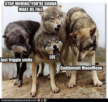 moon moon the wolf meme