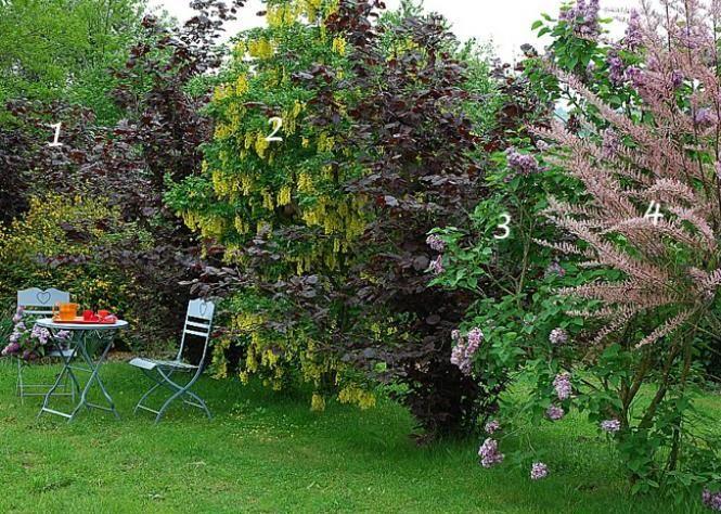 Les 24 meilleures images du tableau haie sur pinterest hedges plantes et am nagement de jardin - Haie persistant fleurie ...