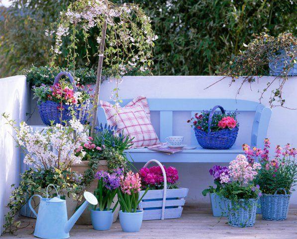 Blue in your garden
