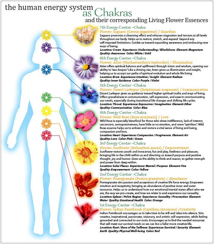 Chakras & Flower Essences