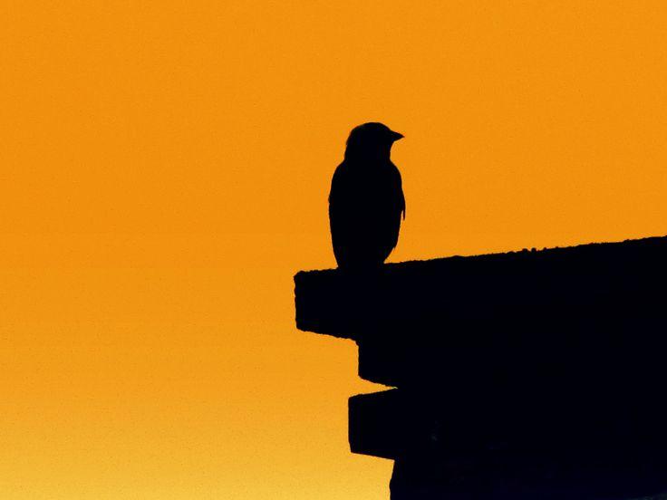 47 Manieren om meer mindful te leven https://sochicken.nl/mindful-leven