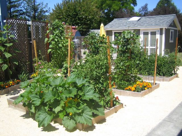 Inspired by the simplicity in gardening thread, I'm asking everyone for their favorite tips to make gardening less maintenance and therefore, less time consuming. While we all enjoy certain aspects of gardening more than others (like to water, don't like to weed) saving a little time is always a goo...