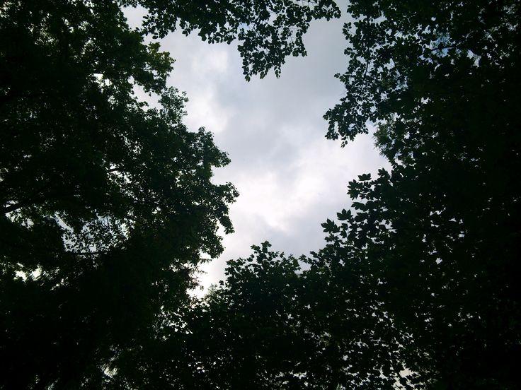 Sky. Elisabeth Pelichovská